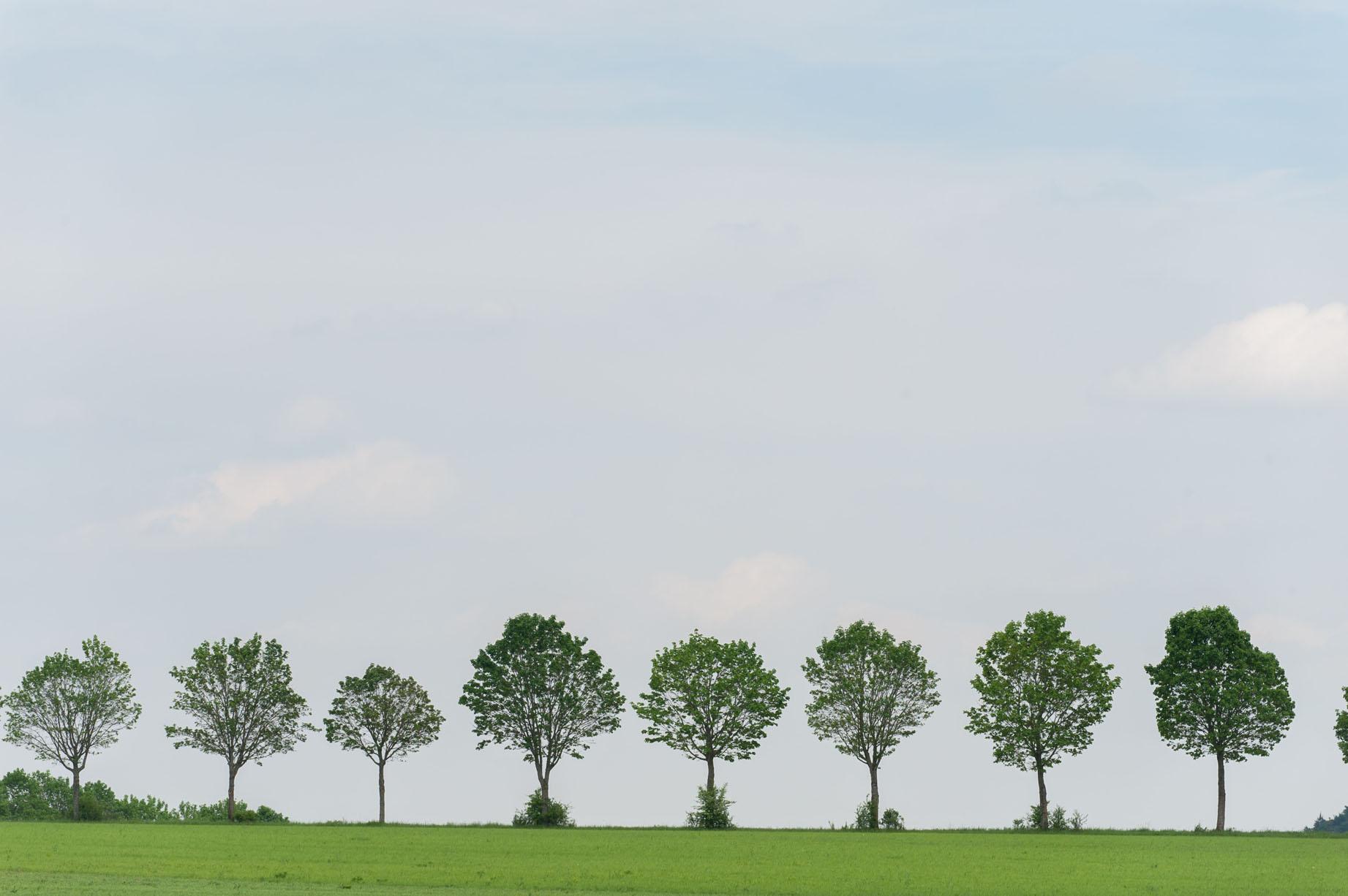 Bomenlaan Schloss Möhren