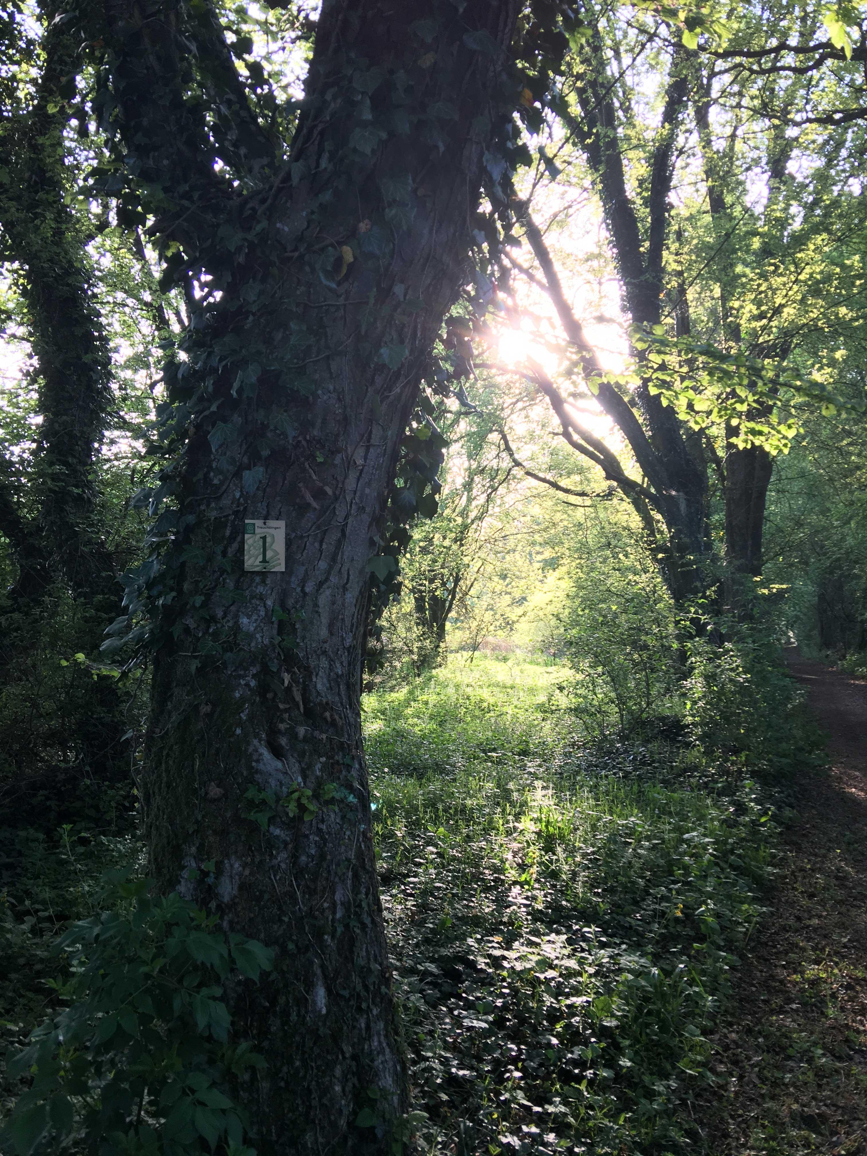 Wandelen door een verlaten bos