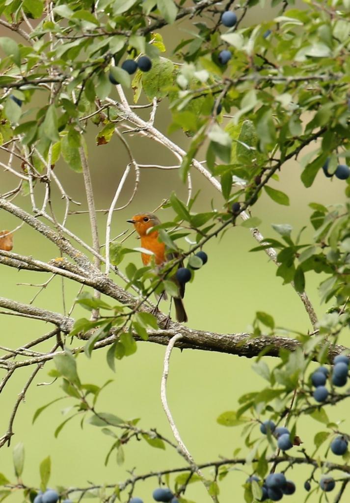Vogeltour vogelvakantie Beieren Zuid-Duitsland Altmühltal