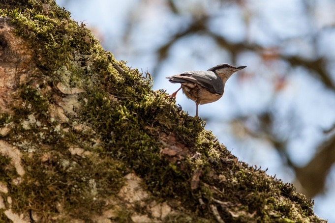 Vogelvakantie Altmühltal Beieren Zuid-Duitsland