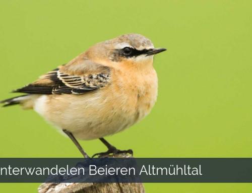 Vogeltour unieke vogels spotten tijdens je vogelvakantie in het Altmühltal