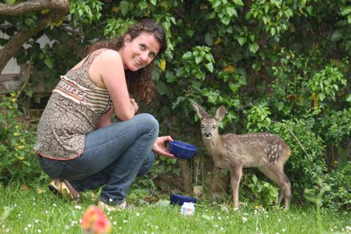 Bambi in de achtertuin