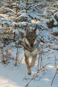 winterwandelen honden welkom