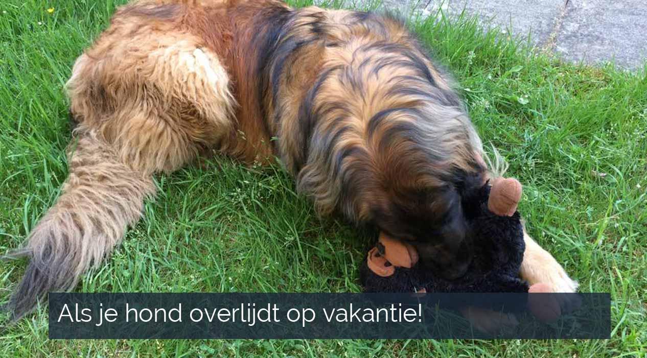 Hond overlijdt tijdens vakantie